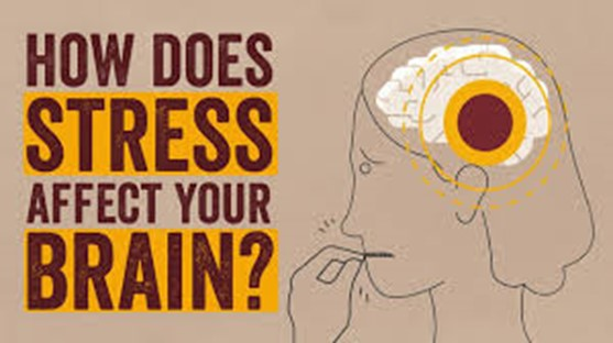How Does Stress Affect Our Brains?